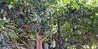 مزارع الريف الأوروبي|مصر اسكندرية الصحراوي| مزراع مصوره المصور داخل سوق العقارات المصرى المصور يحتوى على مجموعةمن المزارع المصورة بتفاصيلها بجميع محافظات و مناطق جمهورية مصر العربية منها مزارع فواكهة و مزارع موالح و مزارع قطن و مزارع اسماك عبارة عن مزارع لها دراسات جدوى توضح التكلفة الاستثمارية و العائد من الارباح الاسنثمارية (تفاصيل المزرعة الاقتصادية ) هذة المزارع تصلح لجميع الانشطة الزراعية من زراعة محاصيل زراعية و فواكة و موالح و اسماك و اقطان و اعشاب و حبوب و غلال و هذة المزارع مساحات و اسعار مختلفة منها مزارع جديدة لم تزرع من قبل و منها مزارع تعمل من قبل و منها مزارع تحت الانشاء ,هذة المزارع بمواقع زراعية بالقرب من النيل رى جارى و مزارع رى أبار و مزارع رى بالتقطير و مزارع ارز.